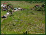 Batad's rice terraces