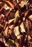 Leaves2IMG_4391.JPG