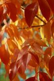 Leaves4IMG_4431.JPG