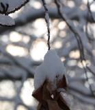 Winter 2005 in Littleton Colorado