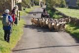 Day10_6_Marrick sheep_p.jpg