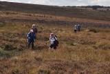 Day14_30_Graystone Hills Bogs.jpg