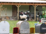 Sheep on Porch