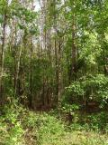 Big Thicket.