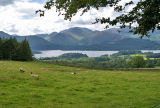 Derwent Water with sheep