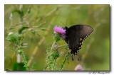 Butterfly on Skyline Drive 2