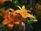 Botanical Gardens_012.jpg