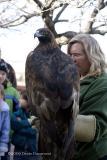 Golden Eagle  & handler