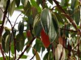 fruit tree?