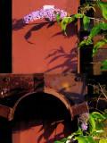 Essen-90307-Zollverein-buddleia lilas.jpg