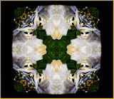 F-Muriel-Paint-Buz-1230178.jpg