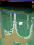 reflets et la mouette rieuse-20795.jpg
