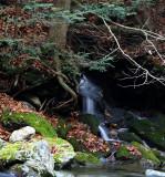 small runoff along bash bish trail