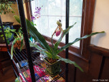 orchids on new shelves
