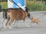 dogs saying hello 2.jpg
