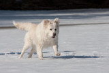 Koirat2009-58.jpg