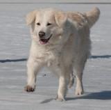 Koirat2009-65.jpg