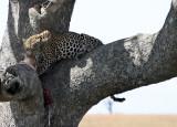 Tanzania - Animals