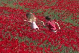 late_spring_in_israel__poppies