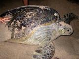 Sea Turtle Preserve- Ujung Genteng
