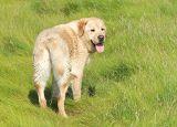 Pbase Bear July 29 2006.jpg