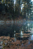 Early Morning at Beaver Pond II