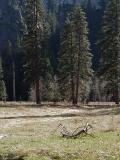 yosemite-meadows