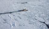 MV Kapitan Khlebnikov in the Ice