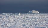 Icebergs in Kane Basin