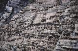 Tichaja Bird Cliff