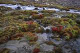 Mosses on Champ Island