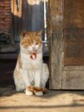 Gritty Kitty.jpg