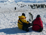 More Emperor Penguin Pictures