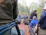 Traffic jam at tiger sighting