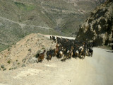 Goats on mountain road