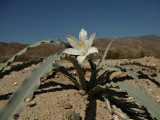 Anza-Borrego National Park (California)
