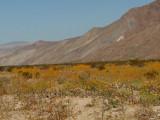 Anza Borrego National Park