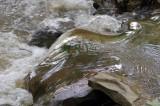 Flowing water DSC_0021.jpg