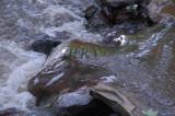 Clean water DSC_3520.jpg