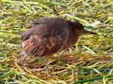 Crimpy House Pet, Lake Titicaca
