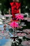 Water Lilies, Lindo Paraiso Resort