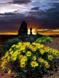 Flowers In Sunset