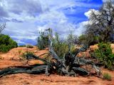 Mesa Of Dead Trees