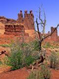Organ Rocks