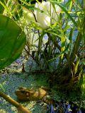 Crimpy Frog In Indian Creek