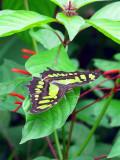 Butterfly In Carrara Park