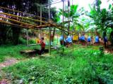 Running Banana Train, Guapiles