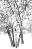 Snow Day - Luke