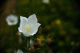 Garden-Flower.jpg
