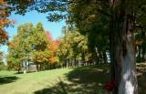 Mountaintop Farm Fall Scene Pale Tree tb10081c